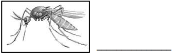 Worksheet - A Treat for Mosquitoes Class 5 Notes | EduRev