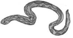 Worksheet - A Snake Charmer's Story Class 5 Notes   EduRev