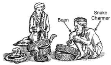 Worksheet - A Snake Charmer's Story Class 5 Notes | EduRev