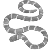 Worksheet - A Snake Charmer's Story Class 5 Notes | EduRev