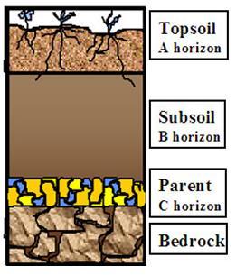 NCERT Gist: Soils (Part - 1) Notes   EduRev