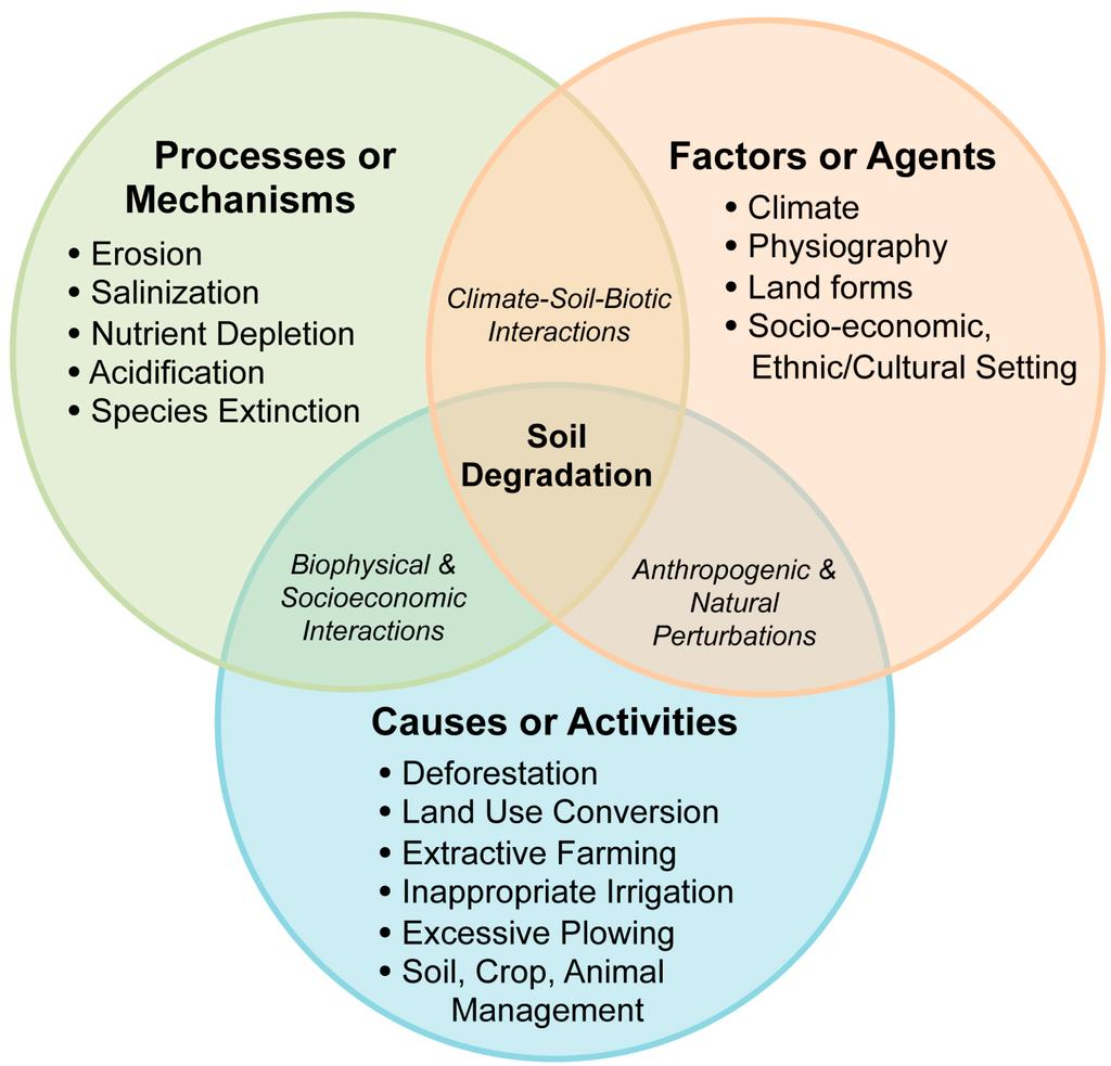 NCERT Summary: Soils - 1 Notes | EduRev