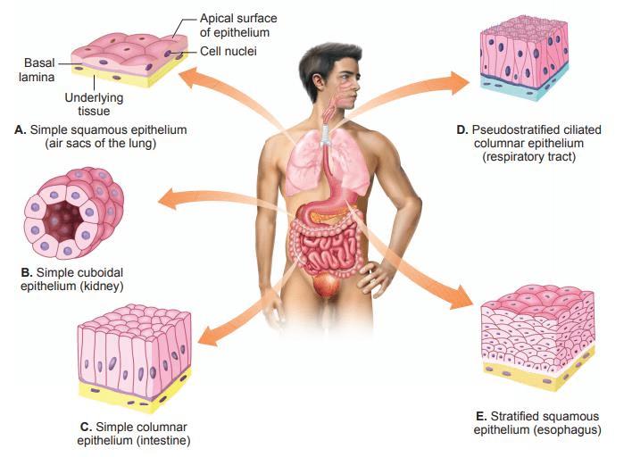 NCERT Gist: Gist of Biology (भाग - 1) Notes | EduRev