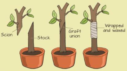 श्वसन, विकास और आंदोलन, वर्चुअलाइजेशन, फोटोऑपरोडिज़्म, कृत्रिम वनस्पति UPSC Notes | EduRev