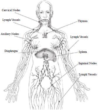 NCERT Summary: Gist of Biology - 3 Notes | EduRev