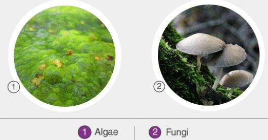 Bacteria, Virus, Algae, Fungi & Lichens UPSC Notes | EduRev