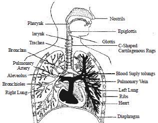 NCERT Summary: Summary of Biology- 4 UPSC Notes | EduRev