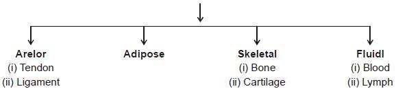 NCERT Summary: Gist of Biology - 1 Notes   EduRev