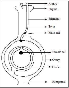 NCERT Summary: Gist of Biology - 6 Notes | EduRev