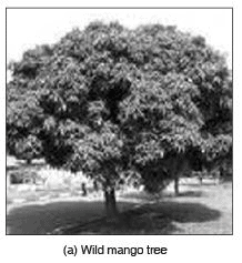 Short Answers - Conservation of Plants and Animals, Science, Class 8 Class 8 Notes | EduRev