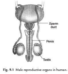 Facts that Matter - Reproduction in Animals Class 8 Notes | EduRev