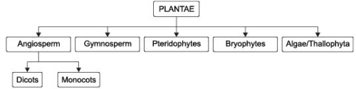 Very Short Answers - Diversity in Living Organisms, Science, Class 9 Class 9 Notes | EduRev