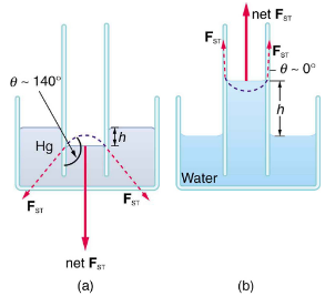 Cohesion and Adhesion in Liquids: Surface Tension and Capillary Action Physics Notes | EduRev