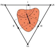 Nerve Conduction–Electrocardiograms Physics Notes | EduRev