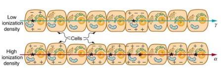 Biological Effects of Ionizing Radiation Physics Notes | EduRev