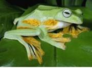 Detailed Notes: Animal Life(Part - 2) Class 5 Notes | EduRev