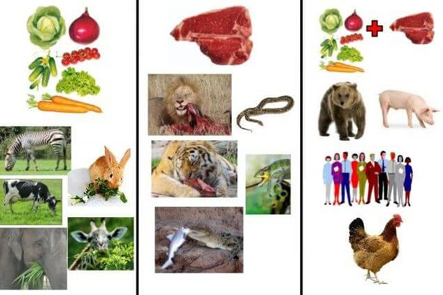 Notes: Food and Health( Part - 3) Class 5 Notes | EduRev