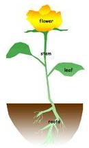 Detailed Notes - Plant Life(Part - 2) Class 5 Notes | EduRev