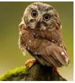 Detailed Notes: Animal Life(Part - 3) Class 5 Notes | EduRev