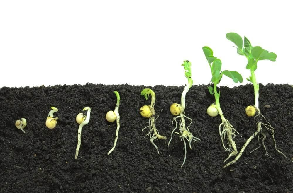 Detailed Notes - Plant Life(Part - 1) Class 5 Notes | EduRev