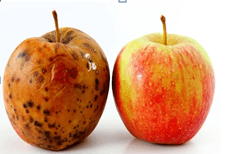 Notes: Food and Health( Part - 1) Class 5 Notes | EduRev
