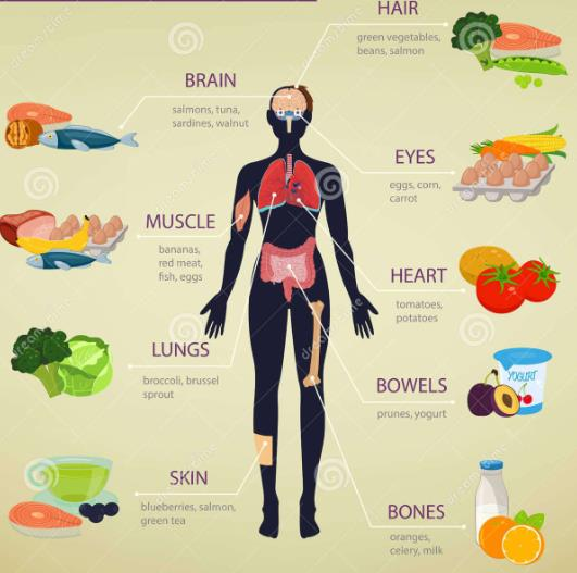 Detailed Notes: Human Body and Nutrition(Part - 4) Class 5 Notes | EduRev