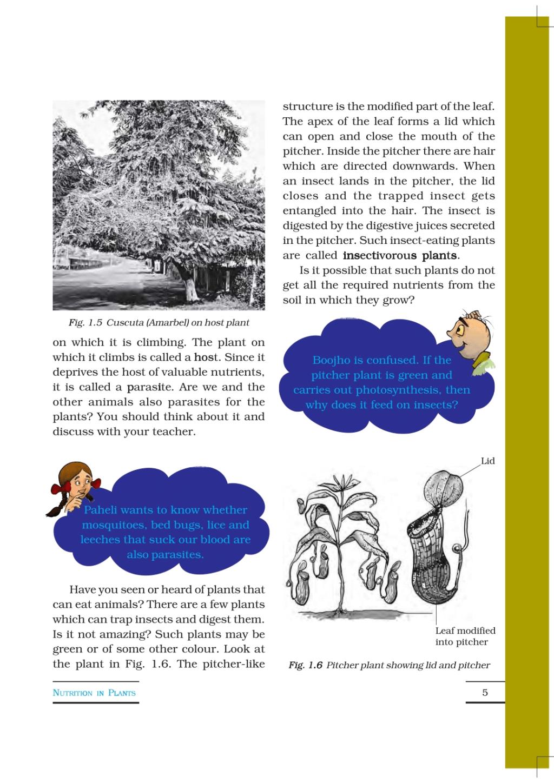 Nutrition in Plants. Class 7 Notes   EduRev