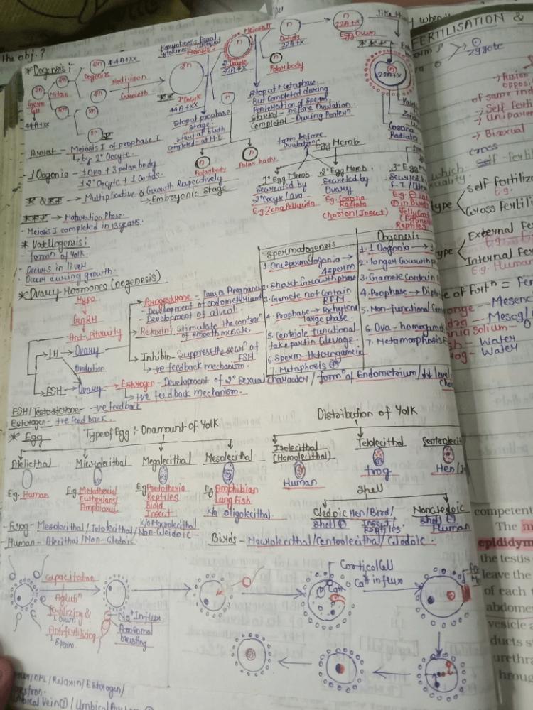 Female reproductive system NEET Notes | EduRev