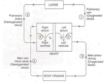 Lakhmir Singh & Manjit Kaur: Life Processes, Solutions- 4 Class 10 Notes | EduRev