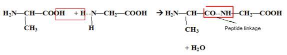 Previous Year Questions (2014-19) - Biomolecules Notes | EduRev