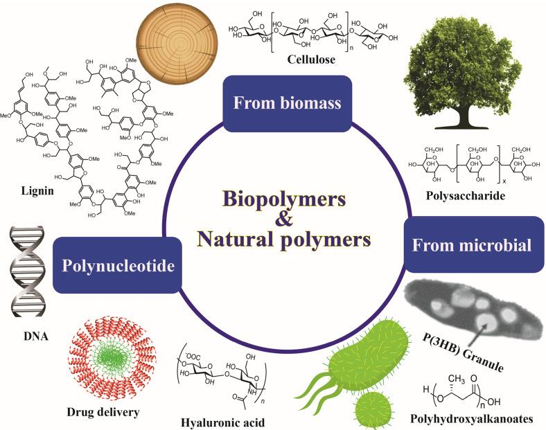 Biopolymers and natural polymers - ScienceDirect