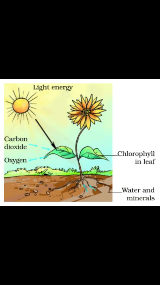Nutrition in plants Class 7 Notes | EduRev