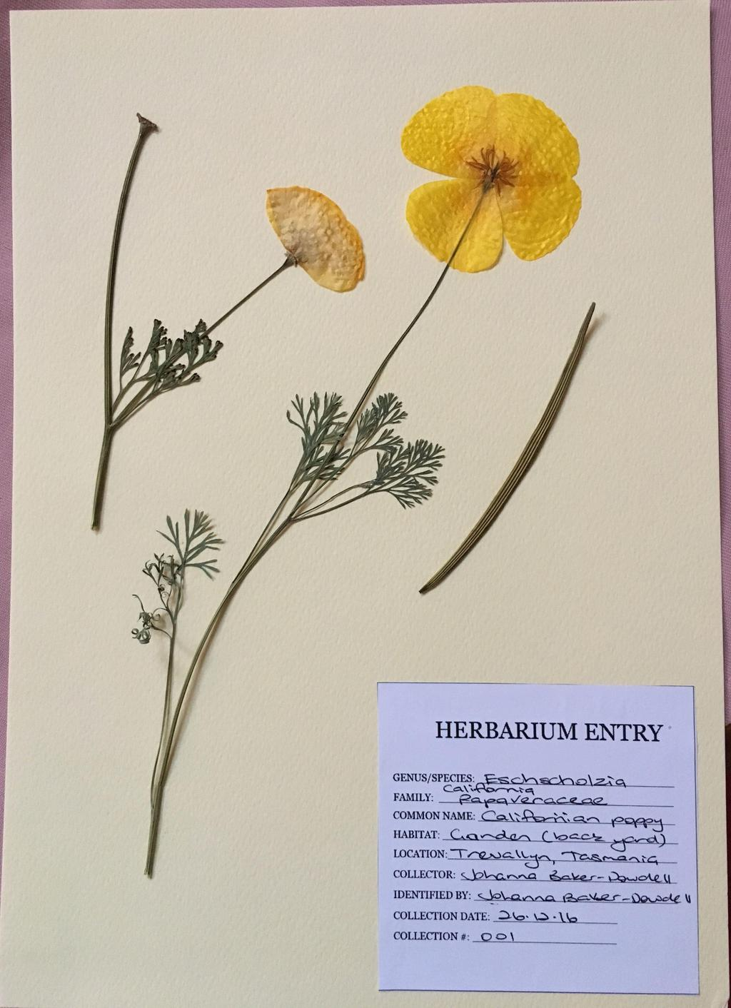 Creative herbarium | Herbarium, Botanical drawings, Pressed flower art
