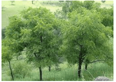 NCERT Solutions - The Plant Fairy Notes | EduRev