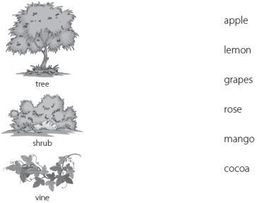 Worksheet 3 - Once I Saw a Little Bird/Mittu and the Yellow Mango Notes | EduRev