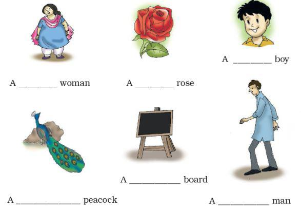 NCERT Solutions - Nina and the Baby Sparrows Notes | EduRev