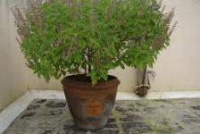 Worksheet - The Plant Fairy Notes | EduRev