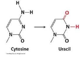 Nucleic Acids -Bio-Molecules Chemistry Notes   EduRev