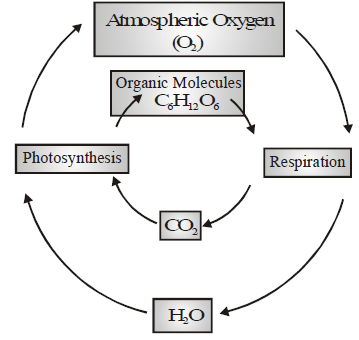 Types of Bio Geo-Chemical Cycles, Ozone Layer and Green House Effect Class 9 Notes | EduRev
