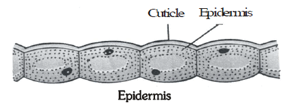 Plant Tissues - Tissues, Class 9 | EduRev Notes