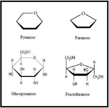Biomolecules, JEE Main Notes JEE Notes   EduRev