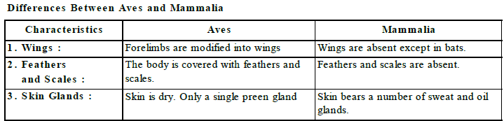 Complex Animals Chordata Class 9 Notes   EduRev