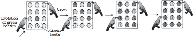 Evolution, Variations and Darwin`s Theory Class 10 Notes | EduRev