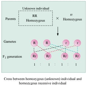 NCERT Solutions- Principles of Inheritance and Variation NEET Notes | EduRev