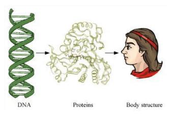 NCERT Solutions - How do organisms Reproduce Class 10 Notes | EduRev