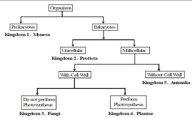Hierarchy Class 9 Notes | EduRev