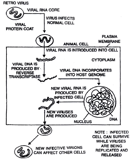 Chapter Notes - Immunity and Disease, Class 12, Biology