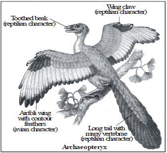 Tracing Evolutionary Relationships, Fossils and Evolution Class 10 Notes | EduRev