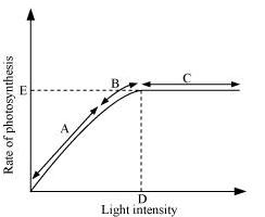 NCERT Solutions - Photosynthesis in Higher Plants NEET Notes | EduRev