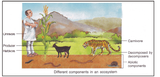 Ecosystem and Food Chain Class 10 Notes   EduRev